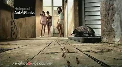 Antz Pantz Backpackers
